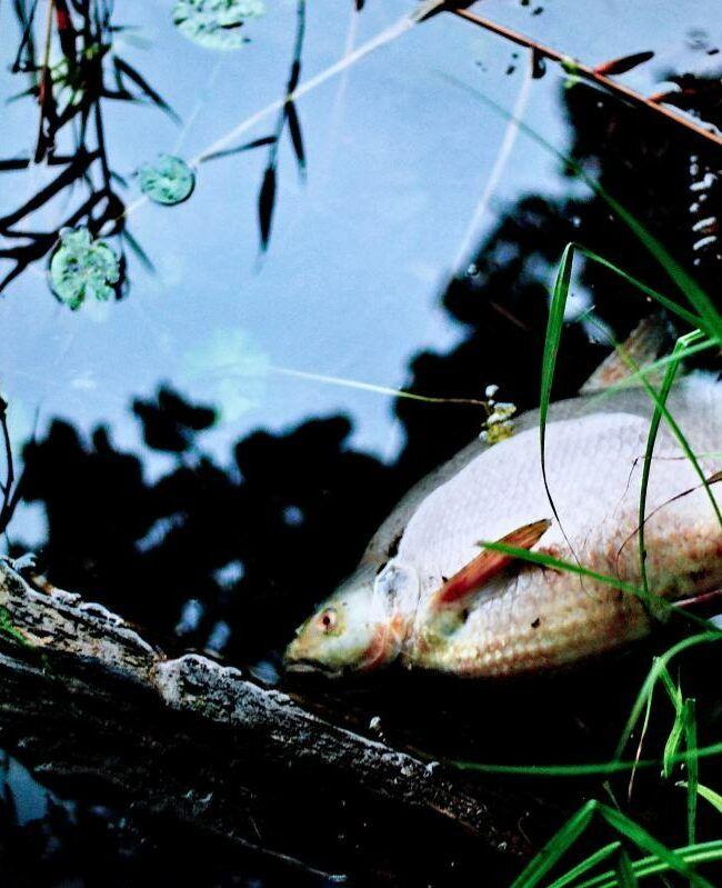 Zanieczyszczenie rzek powoduje umieranie zwierząt