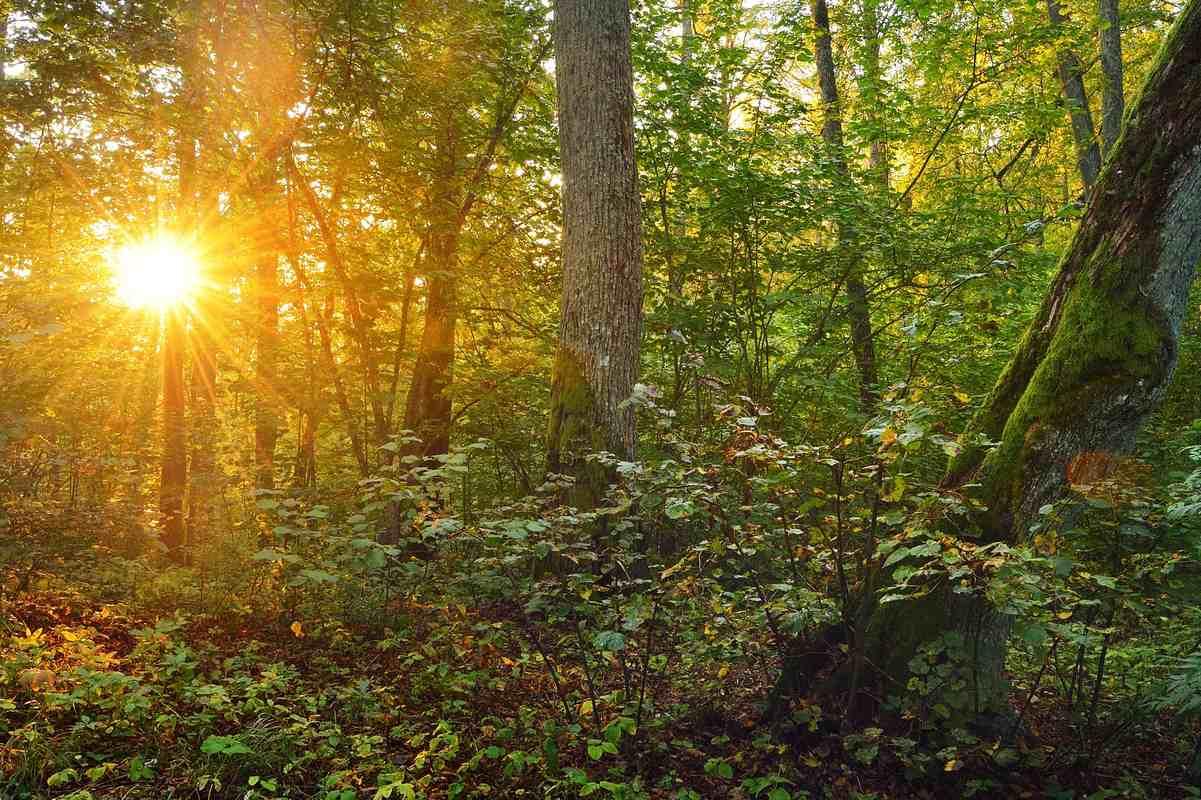Las o wschodzie lub zachodzie słońca. Rezerwat przyrody